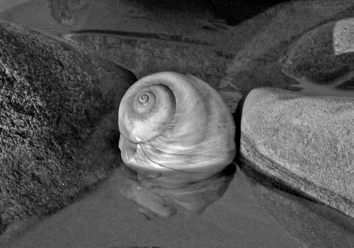 Seashell at the Seashore