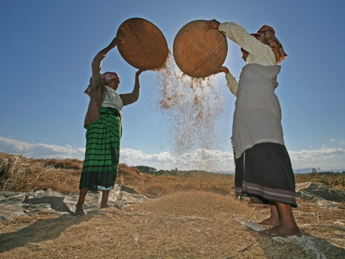 Winnowing Rice, India