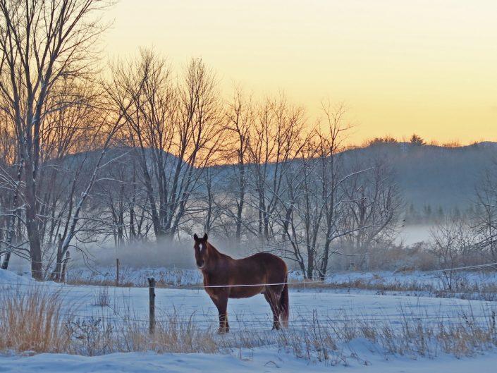 Neighbor's Horse