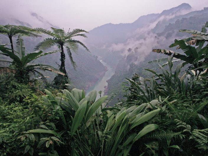 Rainforest, NE India