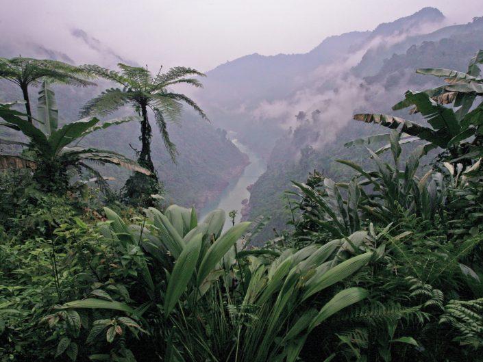Rainforest, NE India