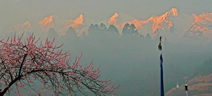 Spring Blossoms, Himalayas, NE India