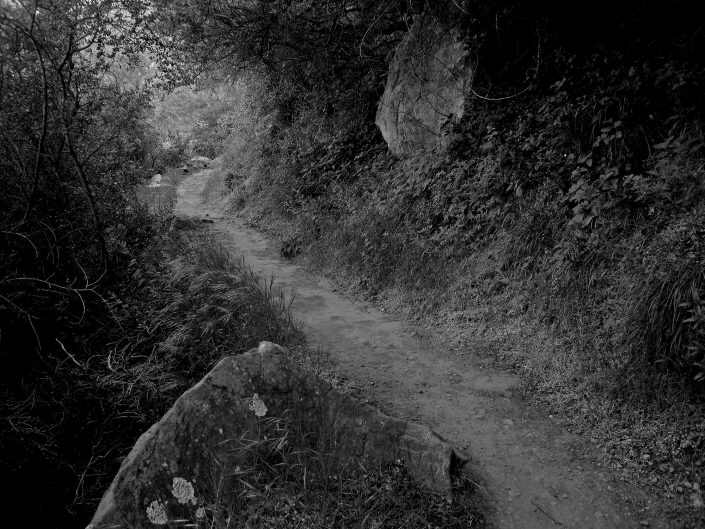 Lonely Trail
