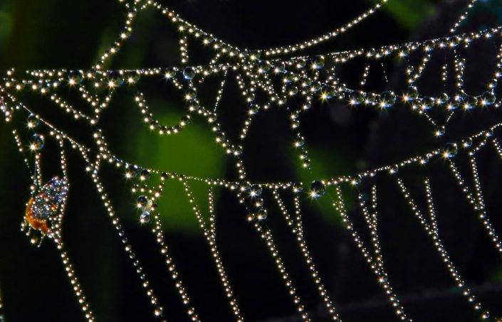 Dew on Spiderweb