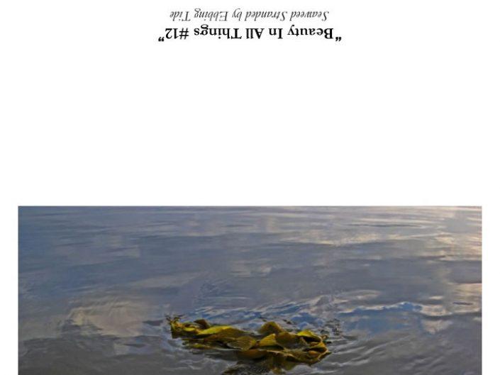 Seaweed Stranded by Ebbing Tide