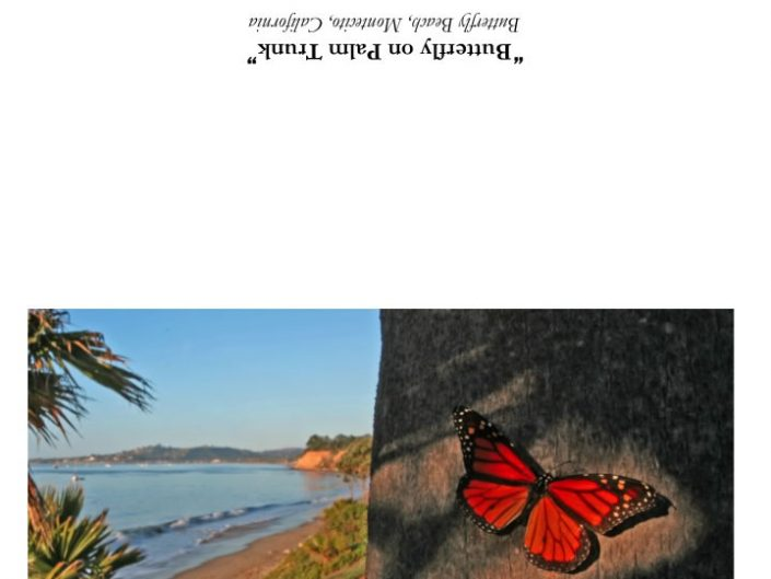 Butterflies4