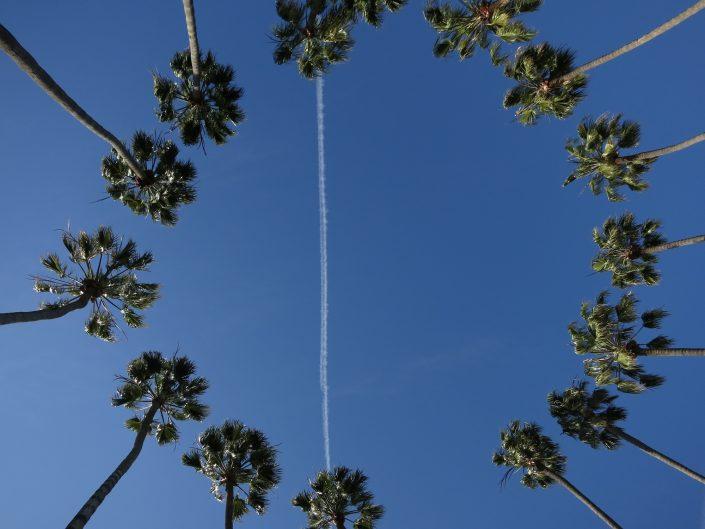 Palm Park