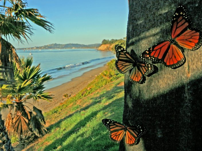 Butterfly Beach and Namesakes